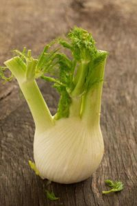 Fenchel in Knollenform