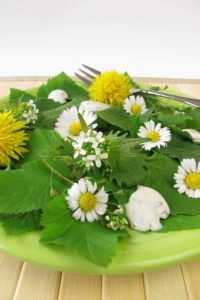 Gänseblümchensalat auf grünem Teller