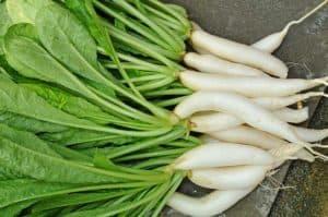 Weißer, gesäuberter Rettich mit Blattgrün