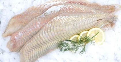 Seelachs-Filet auf Eis mit drei Scheiben Zitrone