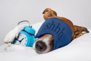 Hund mit Schlafmaske und Wecker auf weißem Kissen