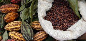 Sack Kakao Bohnen und Früchte