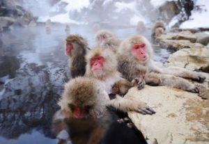 Affen im Wasser