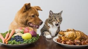 Hund und Katze vor Tellern mit Gemüse und Fleisch