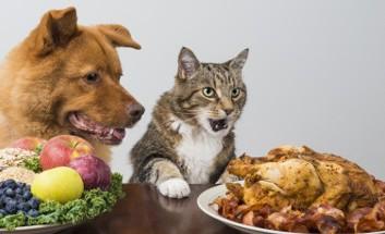 Hund Katze Fleisch Gemüse Entscheidung