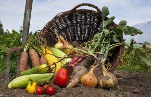 Eine Auswahl verschiedensten Wurzelgemüses, Tomaten und Salat